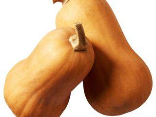 Obrázok Tekvica maslová